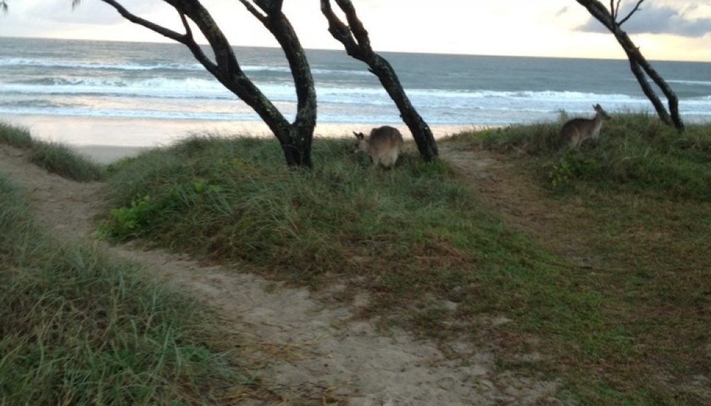 Noosa North Shore - Sunshine Coast